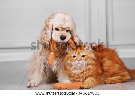 American cocker spaniel and red cat with sausage on floor in room