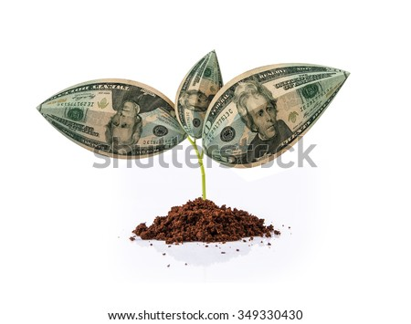 american currency & plant, american dollar & plant, indian currency note growing on plant, money plant, money on tree, currency tree, US $ and plant, US Dollar and growth, US Dollar and growth concept - stock photo