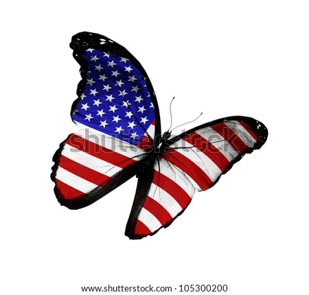 American flag butterfly flying, isolated on white background - stock photo