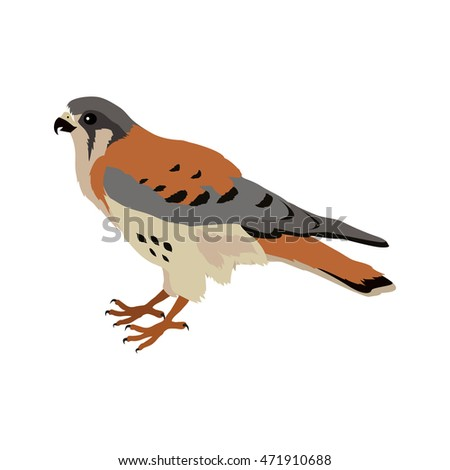 American kestrel . Predatory birds wildlife concept in flat style design. American fauna illustration for prints posters, childrens books illustrating. Beautiful falcon bird seating isolated on white.