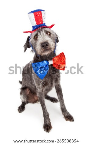 American patriotic dog wearing a red, white and blue hat and big bow tie - stock photo