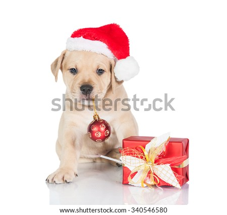 American staffordshire terrier puppy dressed in a christmas hat with a present and christmas ball - stock photo
