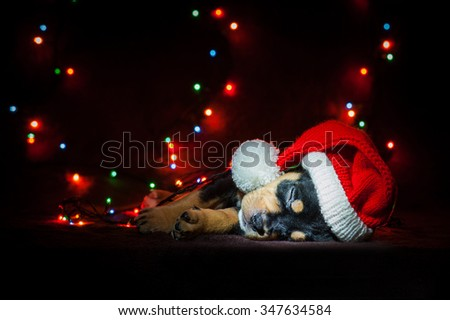 American staffordshire terrier puppy sleeping dressed in a christmas hat with a background of christmas tree lights - stock photo