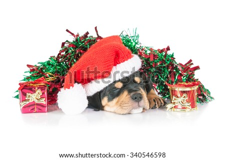 American staffordshire terrier puppy sleeping in a christmas decorations - stock photo