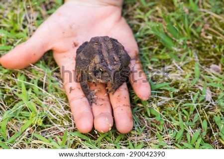 American toad in child's hand on green grass background - stock photo