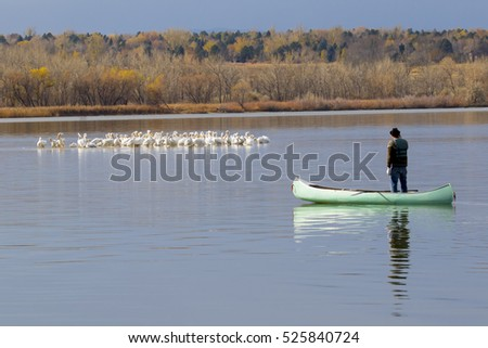 American White Pelicans at Cherry Creek State Park in suburban Denver, Colorado