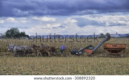 Amish Farmer in Lancaster County Pennsylvania Harvesting Corn with Equipment Pulled by Mules