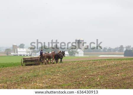 Amish man planting with mules