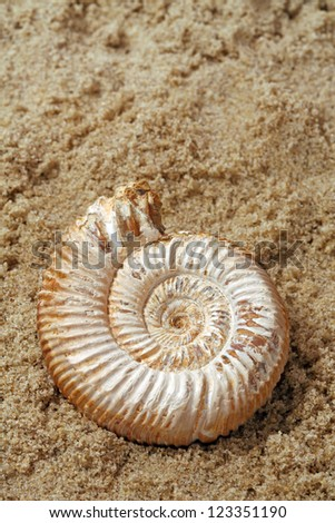 Ammonite Fossil Extinct mollusk from Madagascar on a sandy background.
