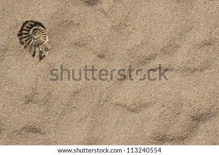 Ammonite fossilized imprints fragment on sand background with copy space - stock photo