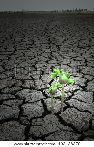 Among the seeds dry on earth concept hope - stock photo