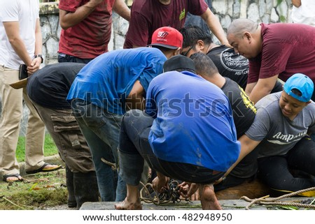 AMPANG, MALAYSIA - Sep 12, 2016 : Muslim man butchers and trimming a buffalo cow to be distributed to muslims in needs during Eid Al-Adha Al Mubarak or the Hari Raya Korban in Ampang, Malaysia.