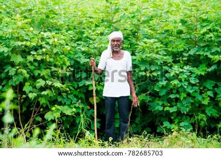cotton plant hindu single women Hoya, wax plant, hindu rope, indian rope, angel rope, porcelain flower 'krinkle kurl' hoya compacta.