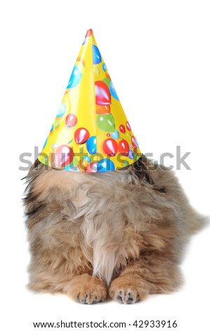 Amusing brown puppy with  cap  isolated, portrait
