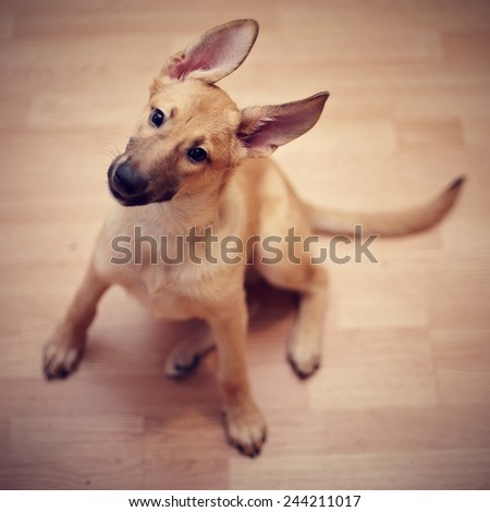 Mongrel Puppy Stock Images Royalty Free Images Vectors