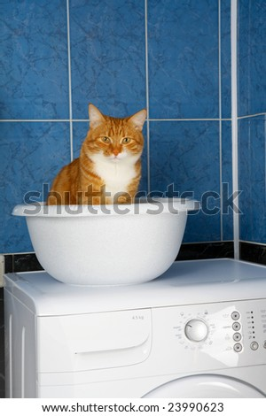 Amusing photo of the cat sitting in a basin in a bathroom - stock photo