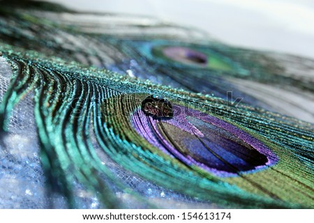 An abstract image of beautiful peacock feathers  - stock photo