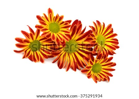 An abstract of an orange gerber daisy macro with water droplets on the petals.. Extreme shallow depth of field. - stock photo