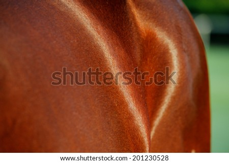 An abstract photo of the Thoroughbred horse. This breed best known for its use in horse racing - stock photo