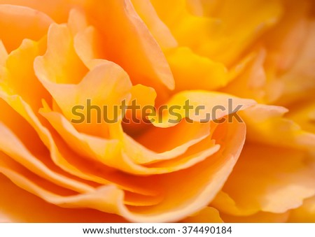 An abstract shot of a pretty begonia bloom. - stock photo