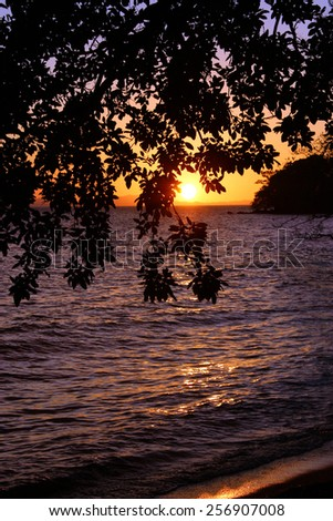 An abstract view of the sunset over the water against a tree branch and leaves - stock photo