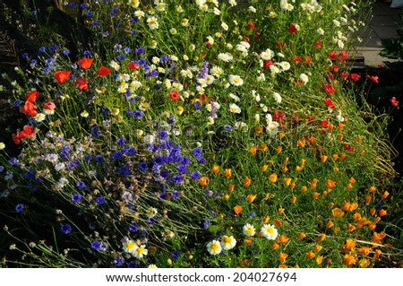 An abundance of wild meadow flowers growing outdoors on community garden allotment.  - stock photo