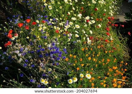 An abundance of wild meadow flowers growing outdoors on community garden allotment.  - stock photo
