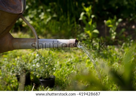 An active senior man watering plants by water can on his huge botanic garden