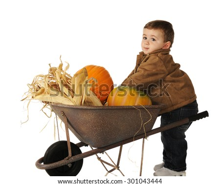 An adorable baby boy putting pumpkins into his wheelbarrow.  Isolated on white. - stock photo