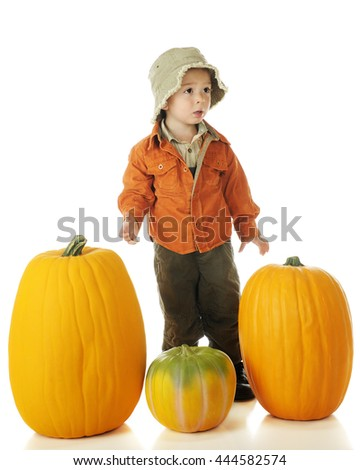 An adorable preschooler mildly upset because he can't lift the pumpkin he wants for Halloween.  On a white background. - stock photo