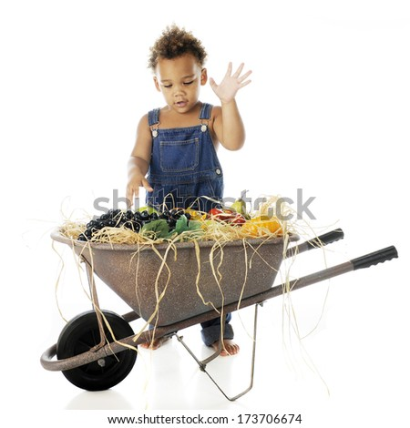 An adorable 2-year-old excited over a wheelbarrow full of fruit.  On a white background.