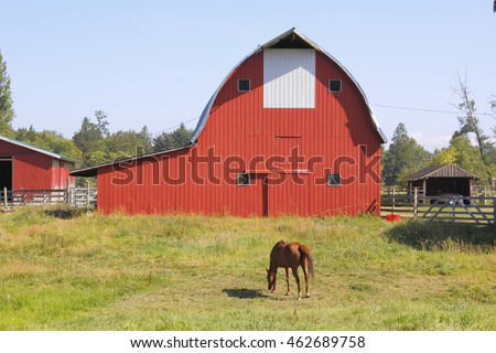 An adult horse grazes in a pasture in front of a traditional red barn/Red Barn and Horse Grazing/An adult horse grazes in a pasture in front of a traditional red barn.