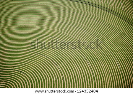 An aerial view of hay being dried in a farm field - stock photo