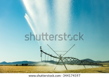An afternoon view of a center pivot sprinkler system spraying water on a farm field of wheat on a hot summer day.