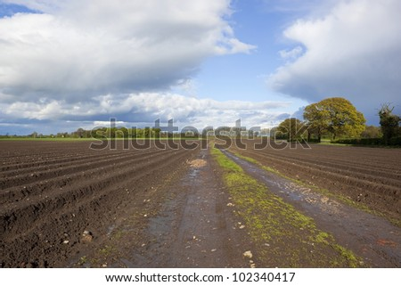 an agricultural landscape with potato rows under dramatic springtime cloudy skies