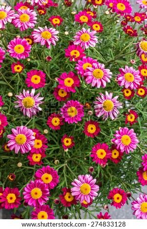An amazing bunch of a spring flowers, made bright colors. - stock photo