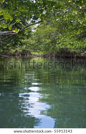 An amazingly beautiful and peaceful mangrove forest scene. - stock photo