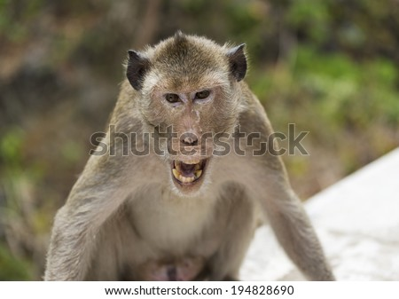 An angry monkey