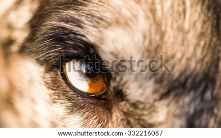 An animals eye is half white and brown making for an intense look