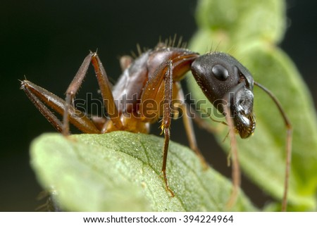 An ant at high magnification - stock photo