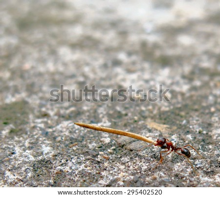 An ant carrying weight - stock photo