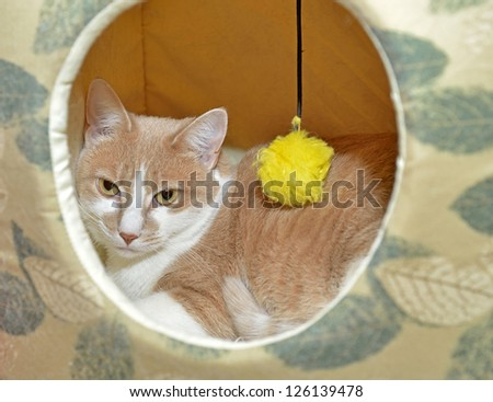 An anxious, but cute, orange and white cat sits inside her fabric enclosure - resting - stock photo