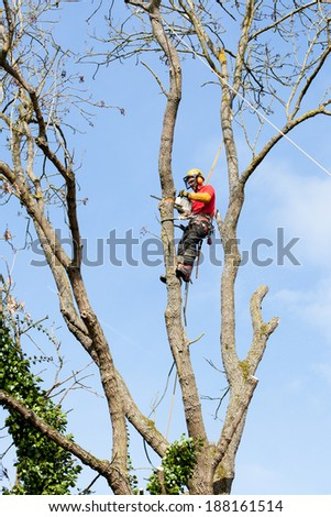 An arborist cutting a tree with a chainsaw  - stock photo