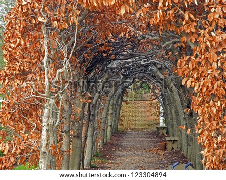 An archway of woven branches with amber leaves, defines this beautiful garden path. - stock photo