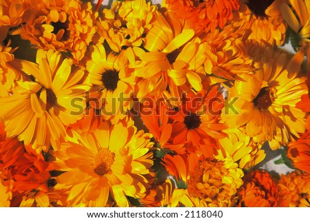 An arrangement of warm colored flowers.