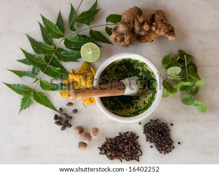 An array of Herbs and spices with a mortar and pestle. - stock photo