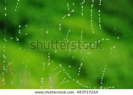 An artistic view of a complex spider web after light summer rain in Alaska.