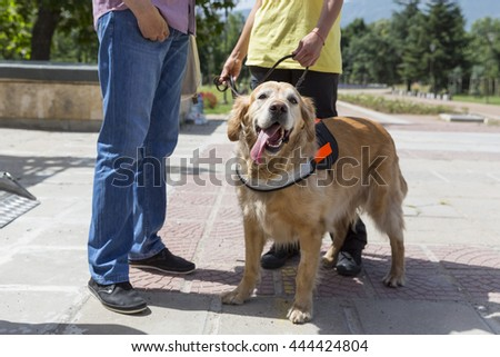 An assistance dog is trained to aid or assist an individual with a disability. Many are trained by an assistance dog organization, or by their handler, often with the help of a professional trainer. - stock photo