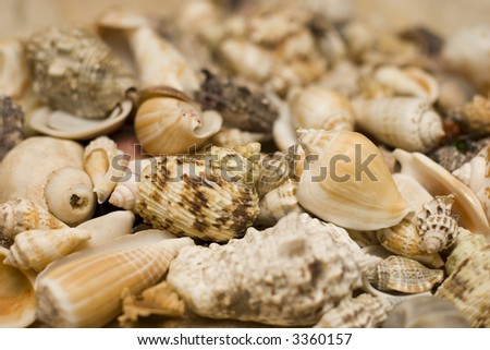 An assortment of sea shells