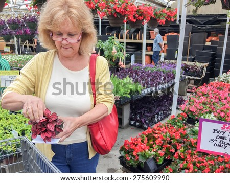 An attractive senior woman is shopping for plants in a greenhouse.  She is holding a polka dot plant and reading the plant care information card.  She is wearing glasses and carrying a red purse. - stock photo